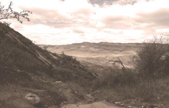 Labyrinthian View