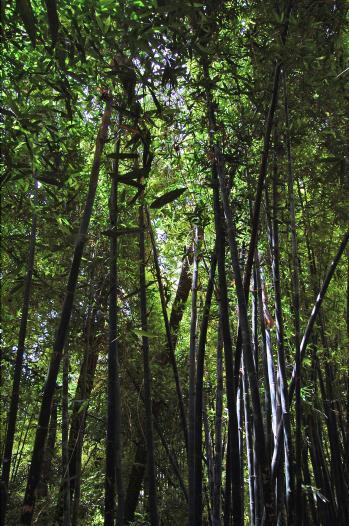 Majorelle Garden-Bamboo-2