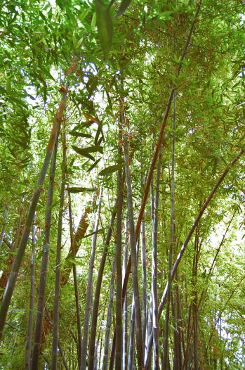 Majorelle Garden-Bamboo-3