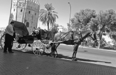 Sevilla - Horse and Carriage