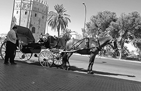 Sevilla - Horse and Carriage 286