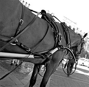 Sevilla - Work Horse 286