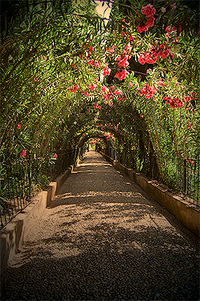 Granada - ALHAMBRA - Flower Tunnel286