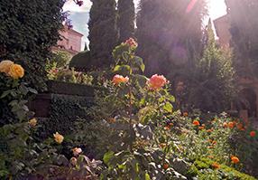 Granada---ALHAMBRA---Flowers 286