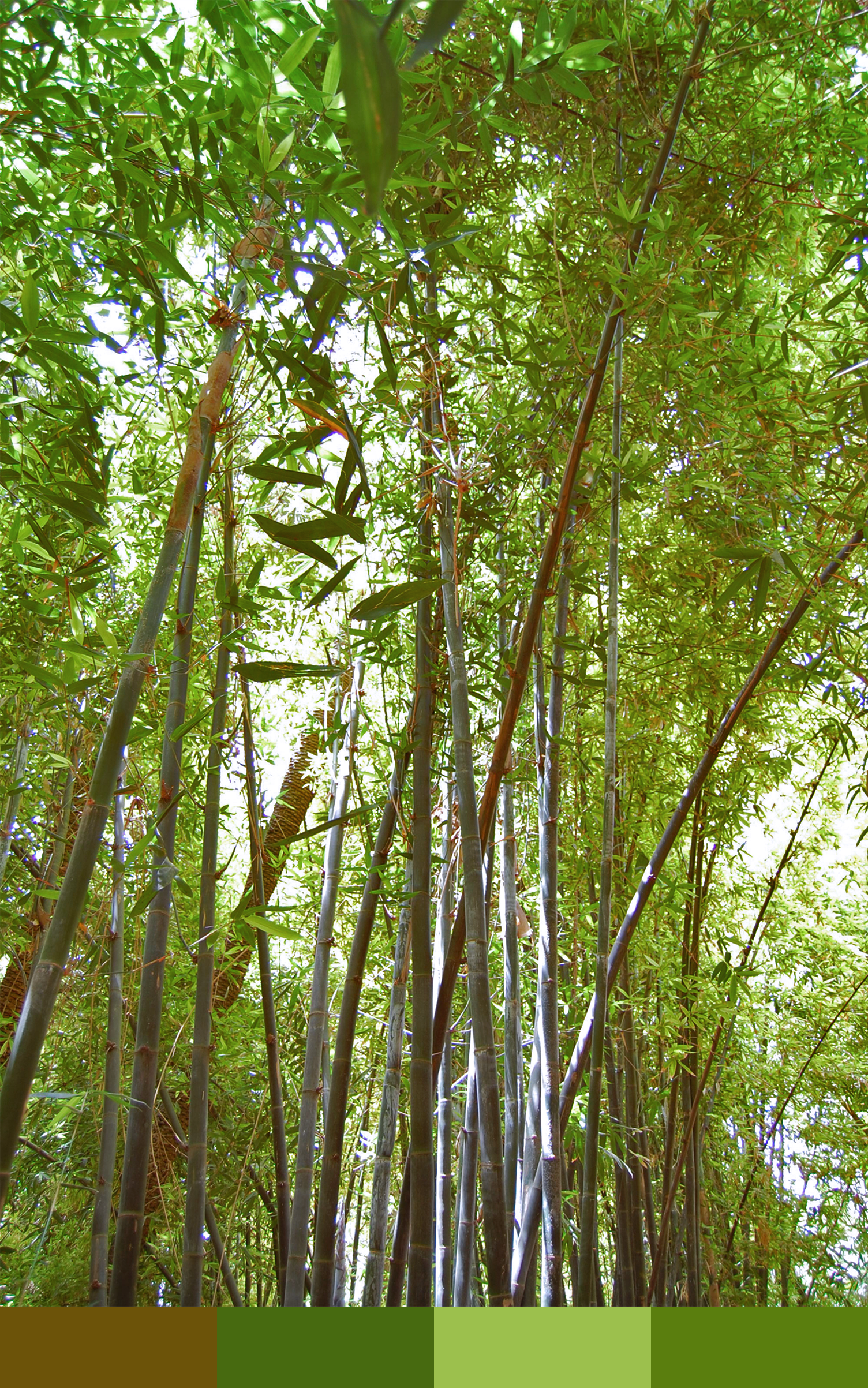 Summer Photo Palettes: Majorelle Garden Bamboo – NotManhattan