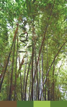 Majorelle Garden-Bamboo-3 Color Paletterev