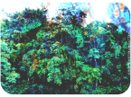 Waldo Trees