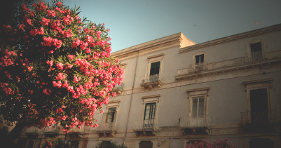 Siracusa Roses & Building
