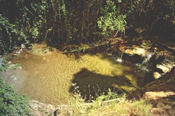 granada - a tiny pond
