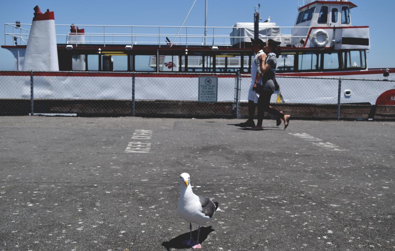 lone-seagull